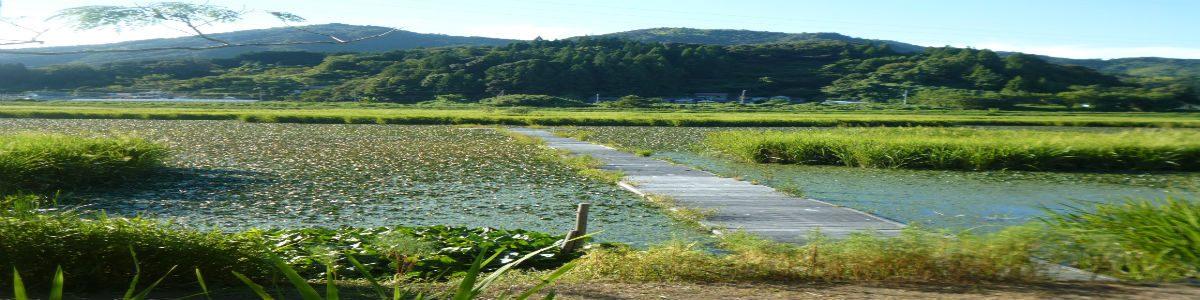 日下川調整池(メダカ池)
