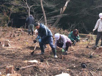 島ノ川渓谷の植樹報告
